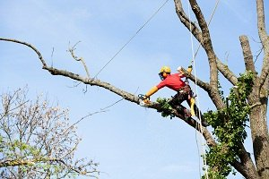 Know Trees LLC How to Save Money on Tree Removal Image-1