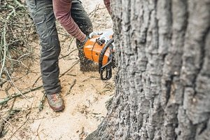 Know Trees LLC How to Save Money on Tree Removal Image-2
