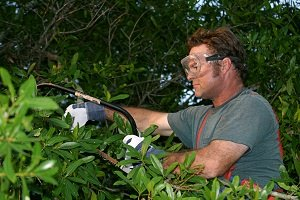 Know Trees LLC Seasonal Pruning Know When to Prune Image-2