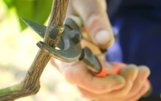 4 Signs You Need a Tree Pruning Service 1