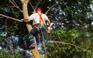 Tree Pruning Common DIY Hazards 2