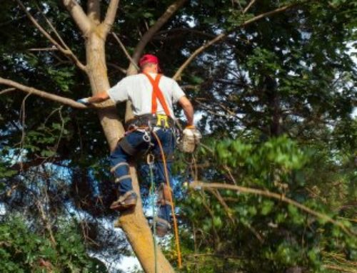 Tree Pruning: Common DIY Hazards