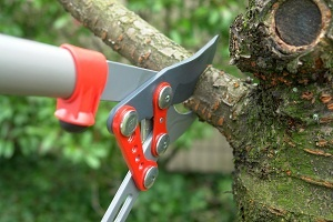 Tree Pruning Service 1