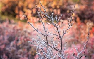 Winter Tips 1