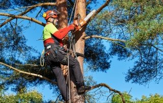 KnowTrees Certified Arborist Image-1