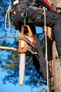 KnowTrees Certified Arborist Image-2