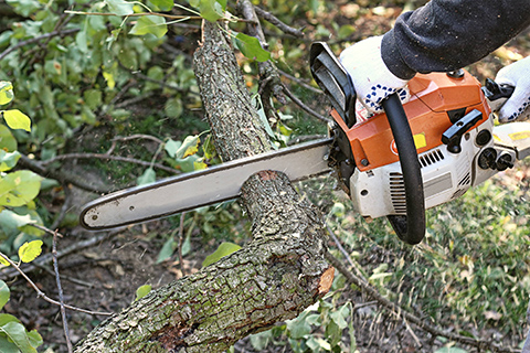 Tree Care near me