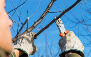 Tree Care Services 1